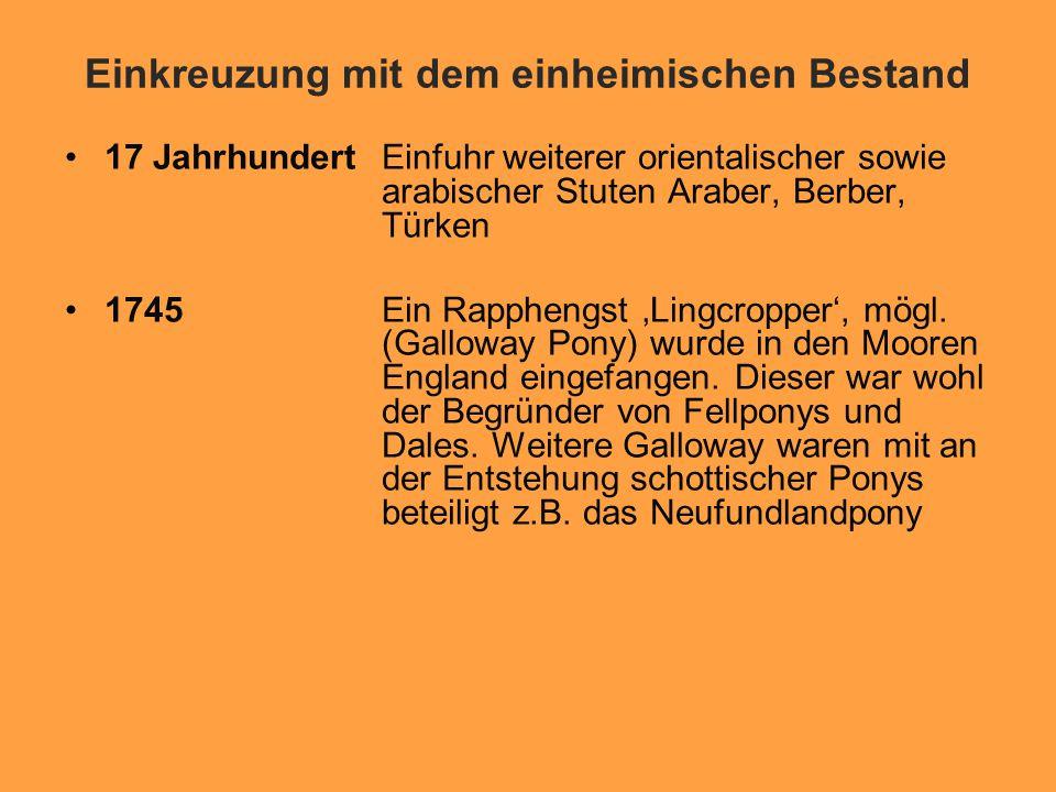 Einkreuzung mit dem einheimischen Bestand 17 JahrhundertEinfuhr weiterer orientalischer sowie arabischer Stuten Araber, Berber, Türken 1745Ein Rapphengst 'Lingcropper', mögl.