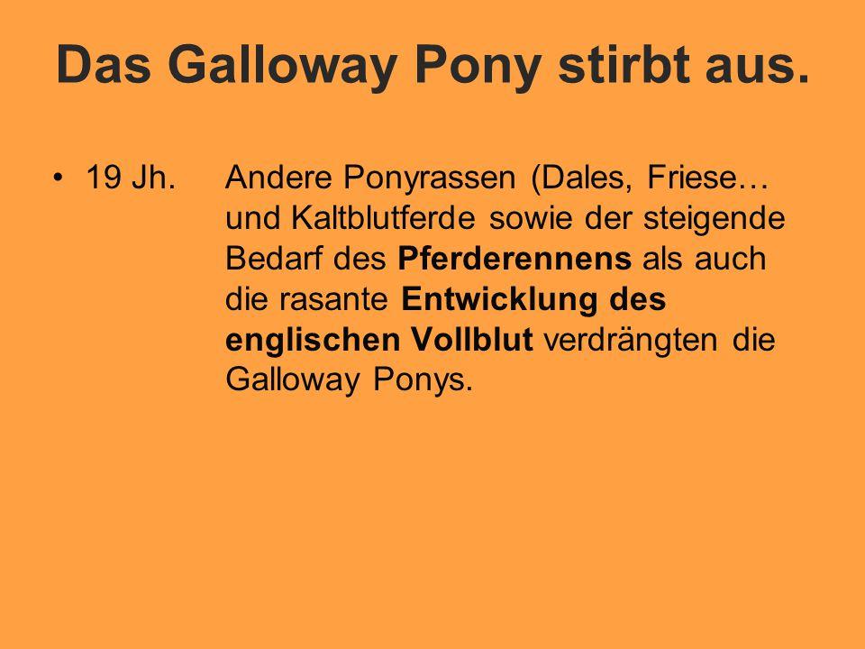 Das Galloway Pony stirbt aus.