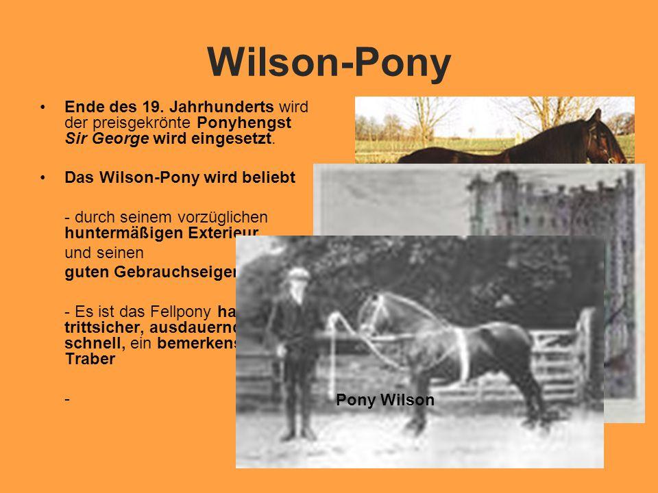 Wilson-Pony Ende des 19.Jahrhunderts wird der preisgekrönte Ponyhengst Sir George wird eingesetzt.