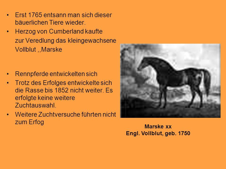 Erst 1765 entsann man sich dieser bäuerlichen Tiere wieder.