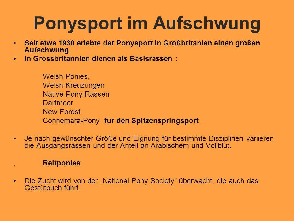 Ponysport im Aufschwung Seit etwa 1930 erlebte der Ponysport in Großbritanien einen großen Aufschwung.