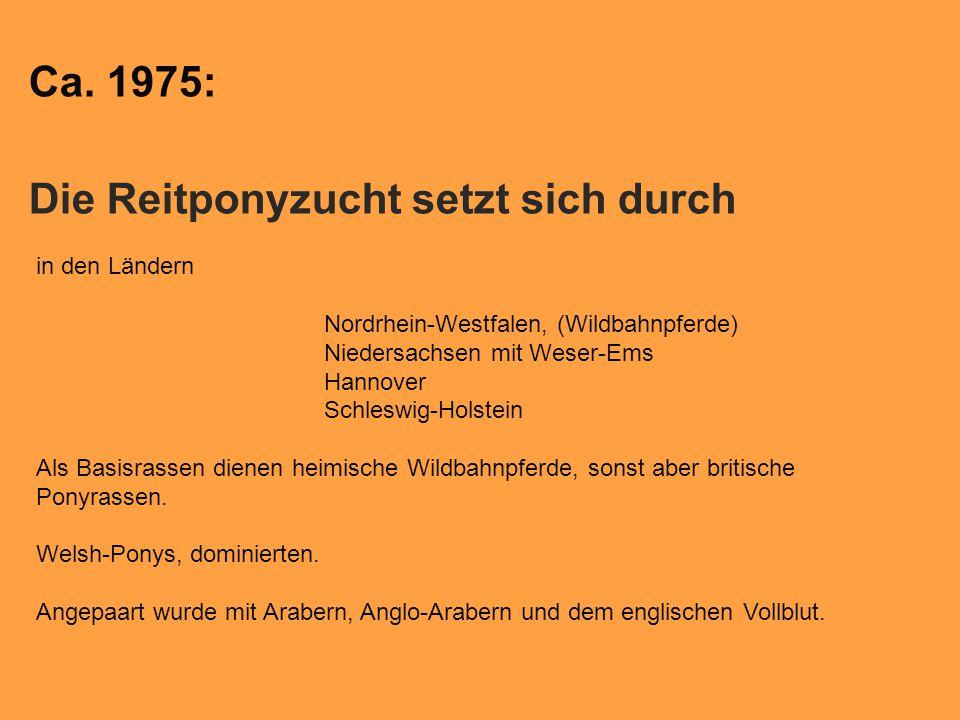 Ca. 1975: Die Reitponyzucht setzt sich durch in den Ländern Nordrhein-Westfalen, (Wildbahnpferde) Niedersachsen mit Weser-Ems Hannover Schleswig-Holst