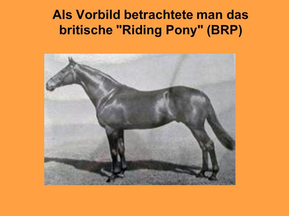 Als Vorbild betrachtete man das britische Riding Pony (BRP)