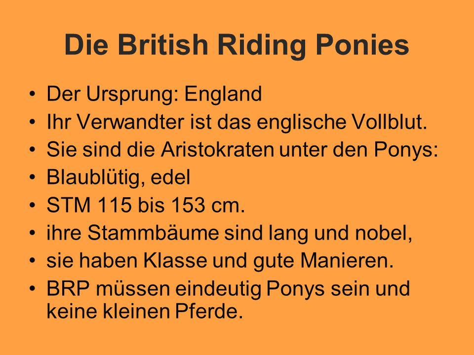 Die British Riding Ponies Der Ursprung: England Ihr Verwandter ist das englische Vollblut.
