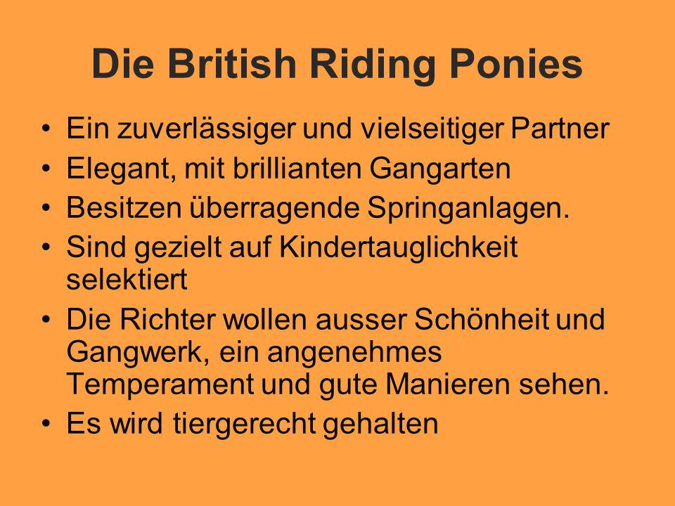 Die British Riding Ponies Ein zuverlässiger und vielseitiger Partner Elegant, mit brillianten Gangarten Besitzen überragende Springanlagen.