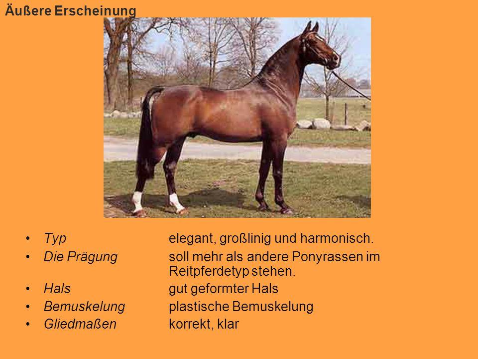 Zuchtgeschichte des Deutschen Reitponys Um die Geschichte des Deutschen Reitponys zu verstehen, muss man sich mit der Geschichte des Englischen Reitponys auseinandersetzen