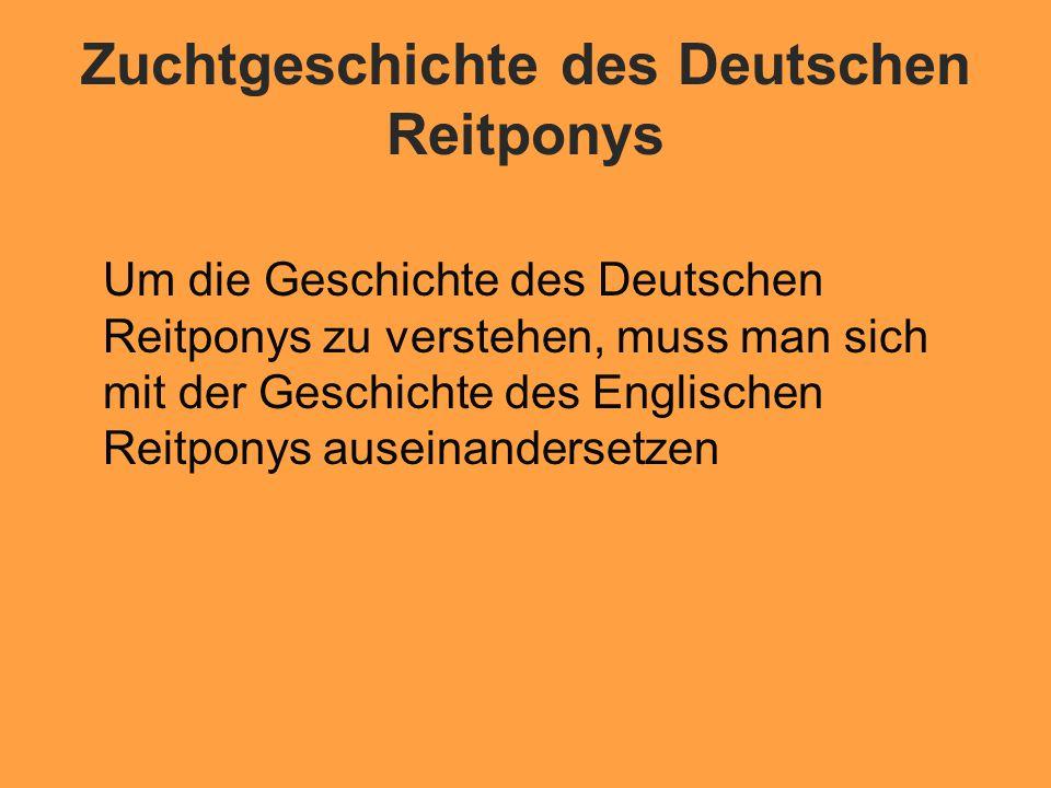 Geburtsland:Grossbritannien Das Reitpony, wie es heute in den meisten westeuropäischen Ländern gezüchtet wird, ist ursrünglich eine englische Erfindung 2 Jahrhundert v.
