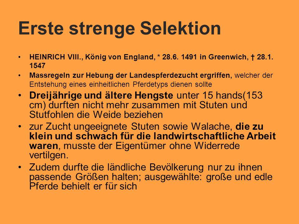 Erste strenge Selektion HEINRICH VIII., König von England, * 28.6.