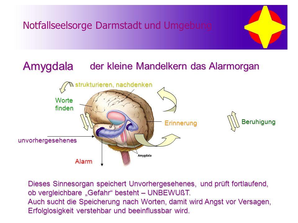 """Notfallseelsorge Darmstadt und Umgebung der kleine Mandelkern das Alarmorgan Dieses Sinnesorgan speichert Unvorhergesehenes, und prüft fortlaufend, ob vergleichbare """"Gefahr besteht – UNBEWUßT."""