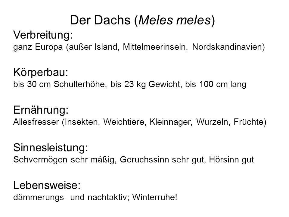Der Dachs (Meles meles) Verbreitung: ganz Europa (außer Island, Mittelmeerinseln, Nordskandinavien) Körperbau: bis 30 cm Schulterhöhe, bis 23 kg Gewic