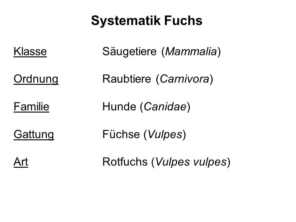 Systematik Fuchs Klasse Säugetiere (Mammalia) Ordnung Raubtiere (Carnivora) Familie Hunde (Canidae) Gattung Füchse (Vulpes) Art Rotfuchs (Vulpes vulpe