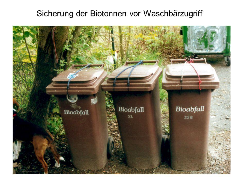 Sicherung der Biotonnen vor Waschbärzugriff