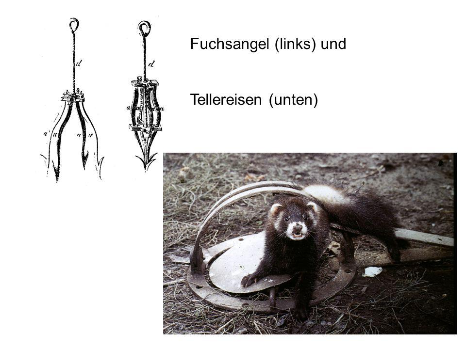 Fuchsangel (links) und Tellereisen (unten)