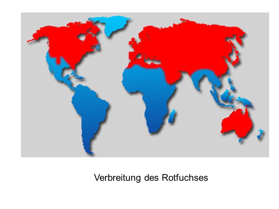 Verbreitung des Rotfuchses