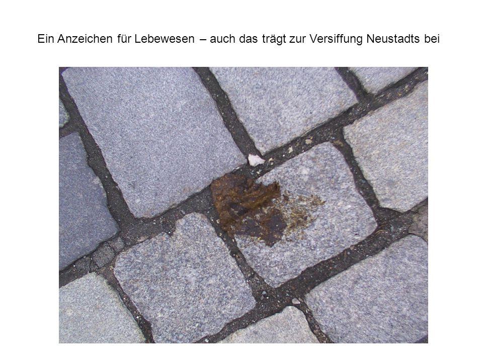 Ein Anzeichen für Lebewesen – auch das trägt zur Versiffung Neustadts bei