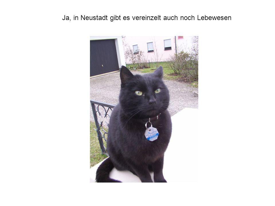 Ja, in Neustadt gibt es vereinzelt auch noch Lebewesen