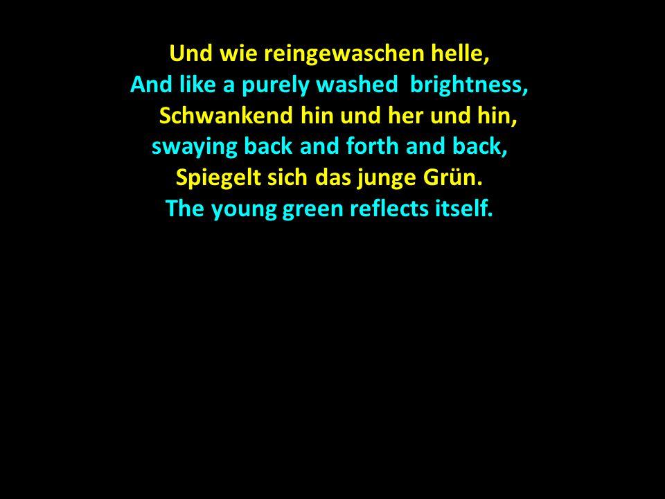 Und wie reingewaschen helle, And like a purely washed brightness, Schwankend hin und her und hin, swaying back and forth and back, Schwankend hin und her und hin, swaying back and forth and back, Spiegelt sich das junge Grün.