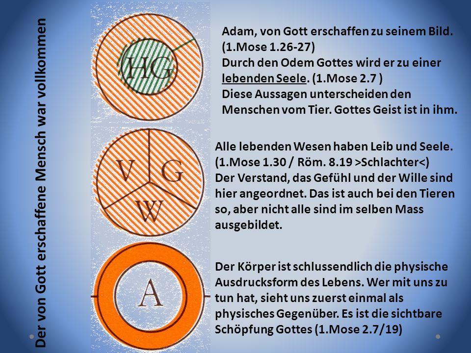 Adam, von Gott erschaffen zu seinem Bild. (1.Mose 1.26-27) Durch den Odem Gottes wird er zu einer lebenden Seele. (1.Mose 2.7 ) Diese Aussagen untersc