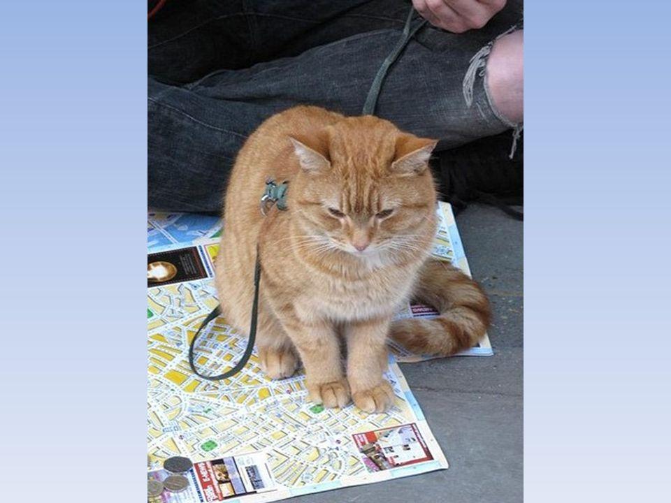 Als James am Morgen zu einem langen Tag aufbrach, an welchem er auf der Straße bettelte, folgte ihm Bob und ließ sich auch nicht abschütteln.