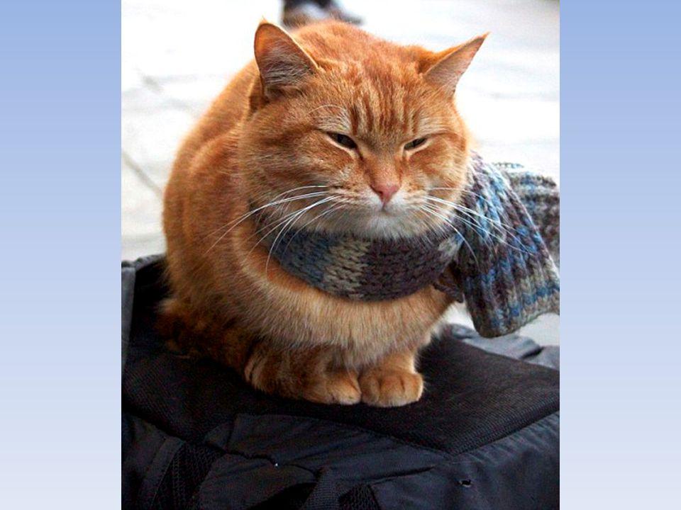 Bob besitzt eine große Auswahl an Schals und alle Welt scheint bereit für ihn zu stricken