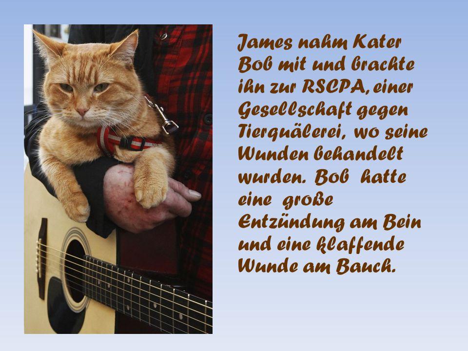 James nahm Kater Bob mit und brachte ihn zur RSCPA, einer Gesellschaft gegen Tierquälerei, wo seine Wunden behandelt wurden.