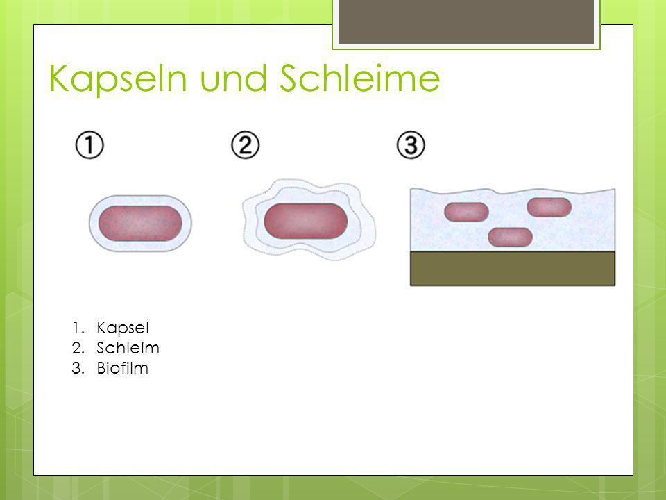 Kapseln und Schleime 1.Kapsel 2.Schleim 3.Biofilm