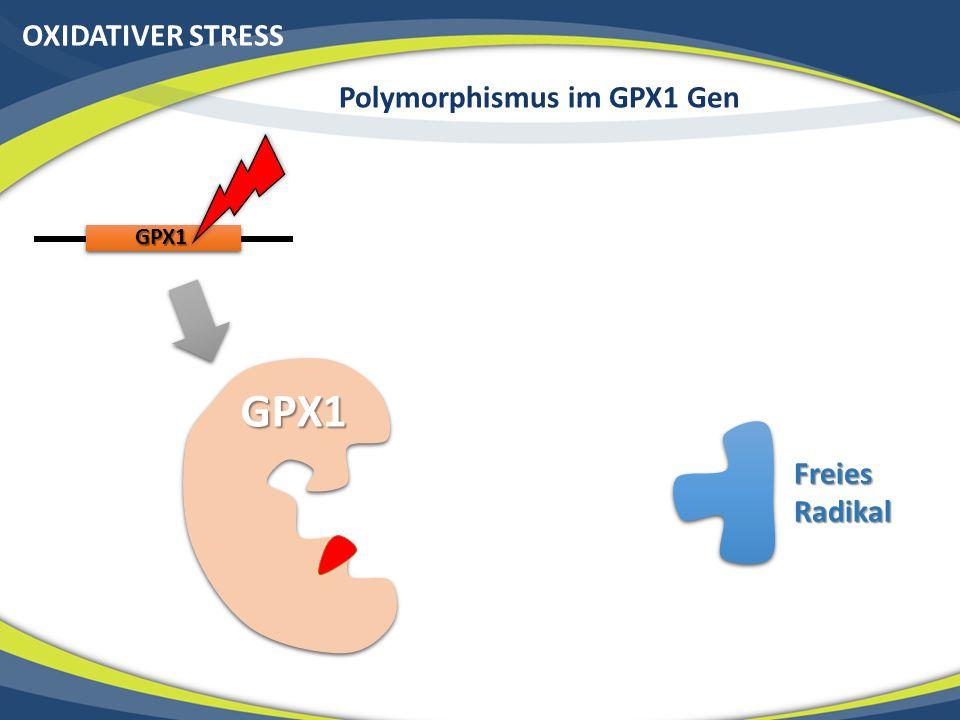 OXIDATIVER STRESS Polymorphismus im GPX1 Gen GPX1 GPX1 Freies Radikal