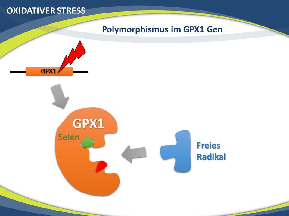 OXIDATIVER STRESS Polymorphismus im GPX1 Gen GPX1 GPX1 Freies Radikal Selen