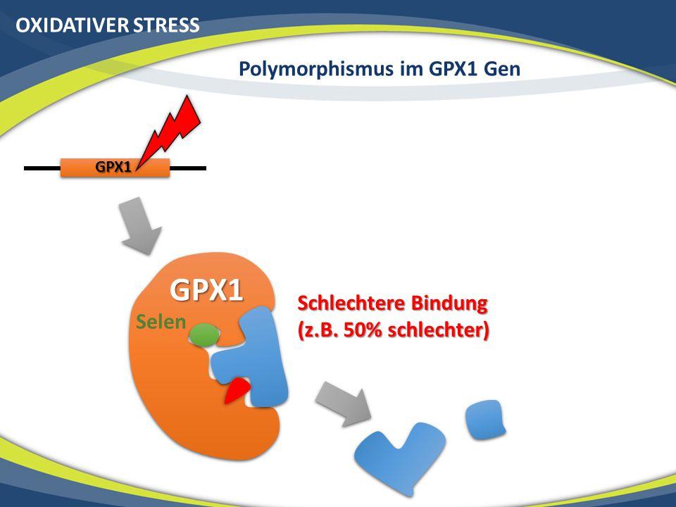 OXIDATIVER STRESS Polymorphismus im GPX1 Gen GPX1 GPX1 Schlechtere Bindung (z.B. 50% schlechter) Selen