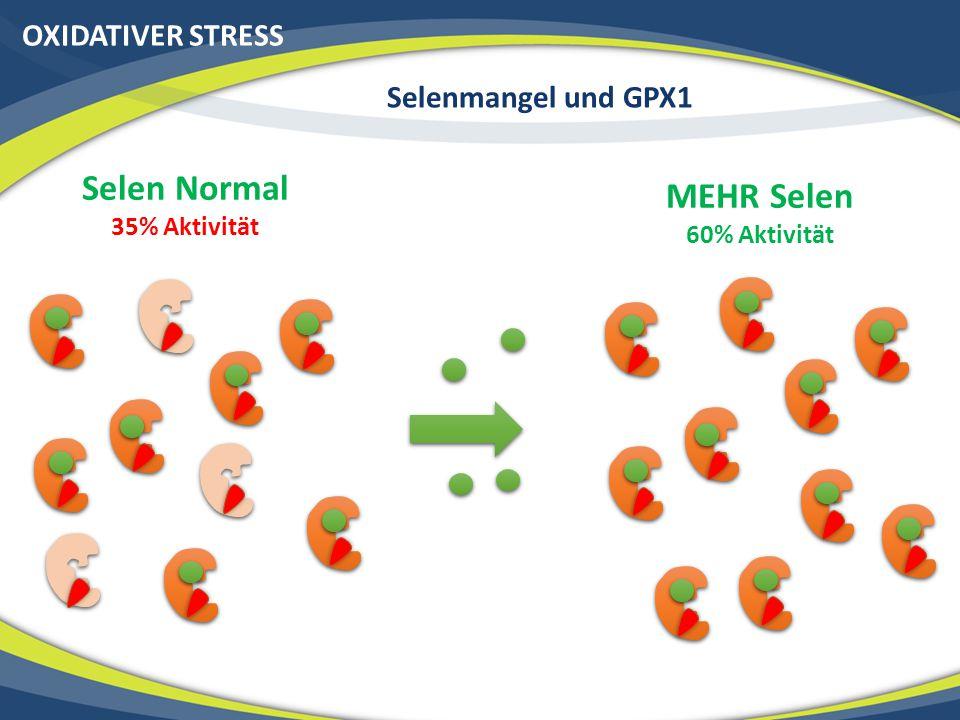OXIDATIVER STRESS Selenmangel und GPX1 Selen Normal 35% Aktivität MEHR Selen 60% Aktivität