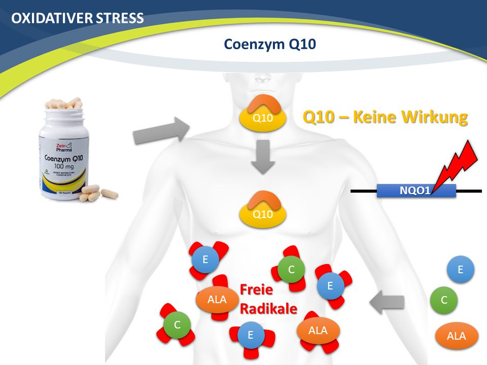 OXIDATIVER STRESS Coenzym Q10 Q10 NQO1 Freie Radikale Q10 – Keine Wirkung Q10 C C E E ALA C C E E E E C C E E