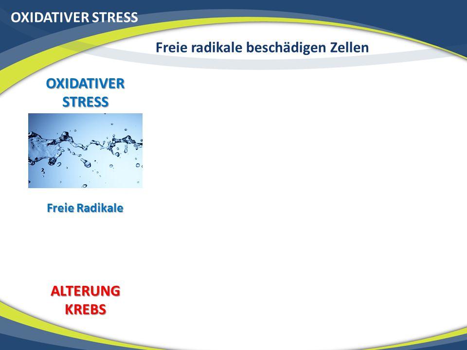 OXIDATIVER STRESS Freie radikale beschädigen Zellen OXIDATIVER STRESS Freie Radikale ALTERUNGKREBS