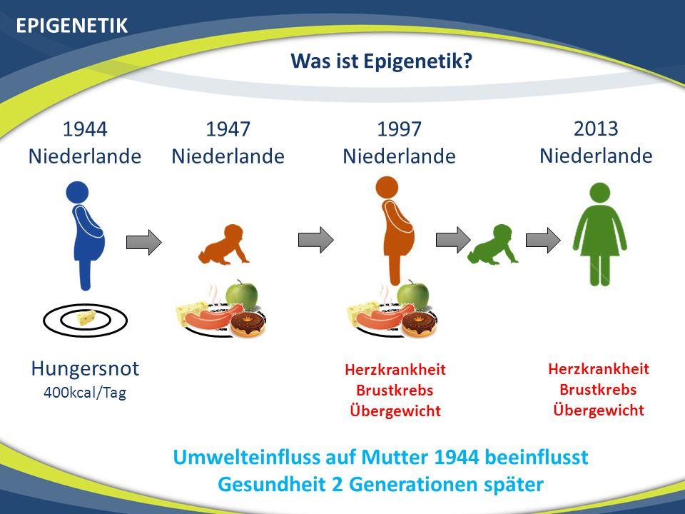 EPIGENETIK Was ist Epigenetik? 1944 Niederlande Hungersnot 400kcal/Tag 1947 Niederlande 1997 Niederlande Herzkrankheit Brustkrebs Übergewicht 2013 Nie