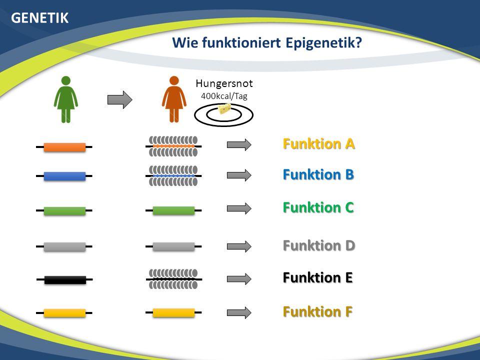 GENETIK Wie funktioniert Epigenetik? Hungersnot 400kcal/Tag Funktion A Funktion B Funktion C Funktion D Funktion E Funktion F
