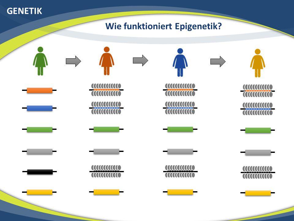 GENETIK Wie funktioniert Epigenetik.