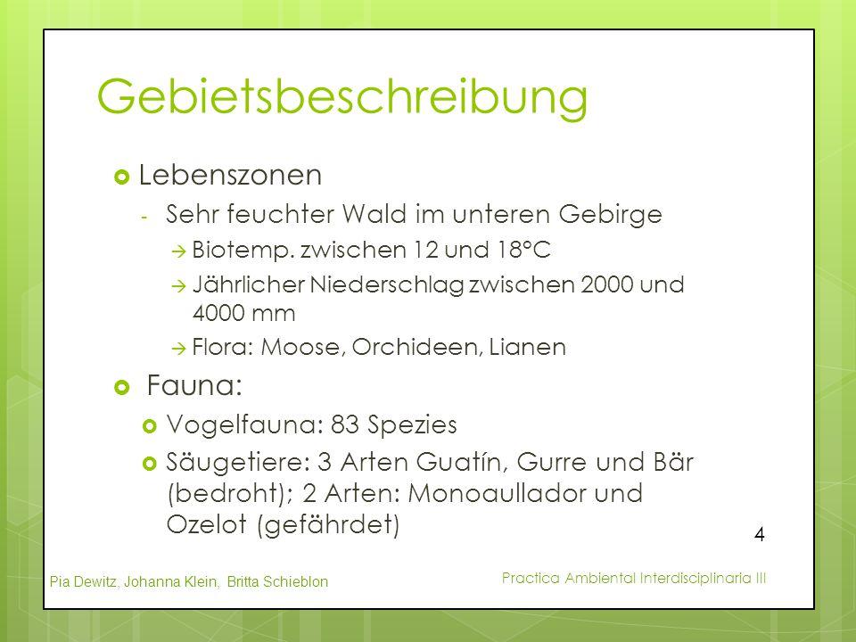 Pia Dewitz, Johanna Klein, Britta Schieblon Practica Ambiental Interdisciplinaria III Gebietsbeschreibung  Lebenszonen - Sehr feuchter Wald im untere