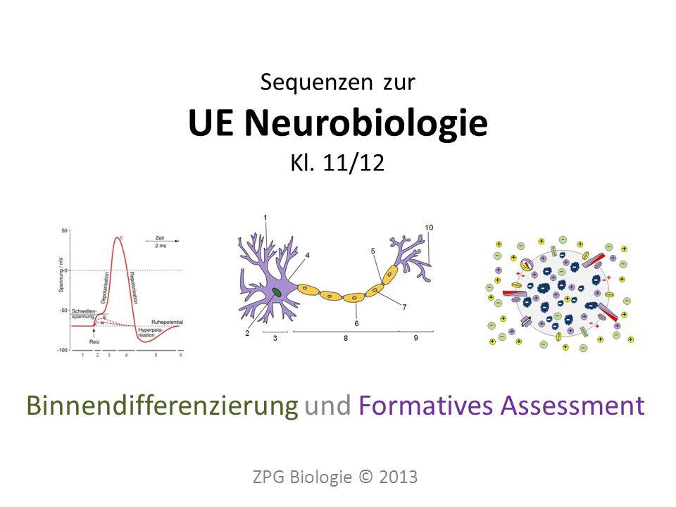 Sequenzen zur UE Neurobiologie Kl.
