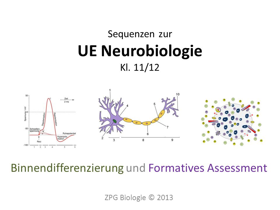 Eingangs- diagnose … Bau Neuron Ruhe- potential Aktions- potential Weiter- leitung von APs Selbst- diagnose Synapsen … ZPG Biologie © 20132300_einfuehrung_neurobiologie