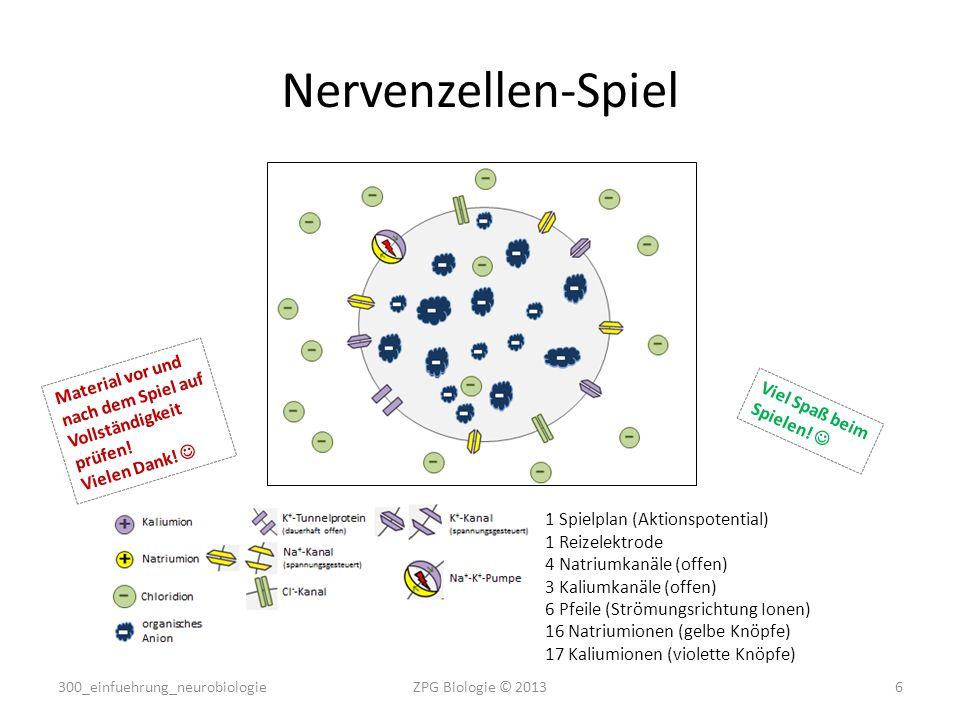 Nervenzellen-Spiel 1 Spielplan (Aktionspotential) 1 Reizelektrode 4 Natriumkanäle (offen) 3 Kaliumkanäle (offen) 6 Pfeile (Strömungsrichtung Ionen) 16 Natriumionen (gelbe Knöpfe) 17 Kaliumionen (violette Knöpfe) Material vor und nach dem Spiel auf Vollständigkeit prüfen.