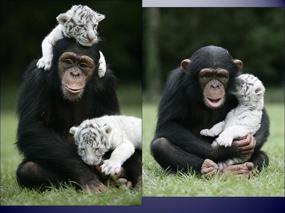 Freunde sind die, die kommen, wenn alle anderen gehen.!