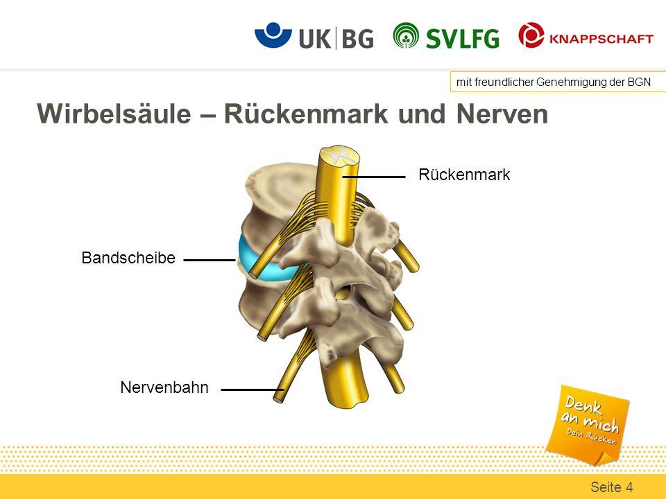 Wirbelsäule – Rückenmark und Nerven Rückenmark Bandscheibe Nervenbahn mit freundlicher Genehmigung der BGN Seite 4