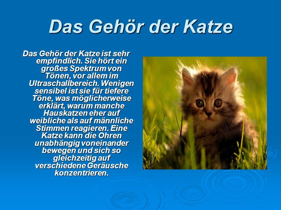 Das Gehör der Katze Das Gehör der Katze ist sehr empfindlich. Sie hört ein großes Spektrum von Tönen, vor allem im Ultraschallbereich. Wenigen sensibe