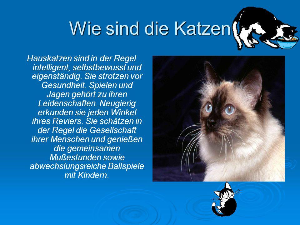 Wie sind die Katzen Hauskatzen sind in der Regel intelligent, selbstbewusst und eigenständig. Sie strotzen vor Gesundheit. Spielen und Jagen gehört zu