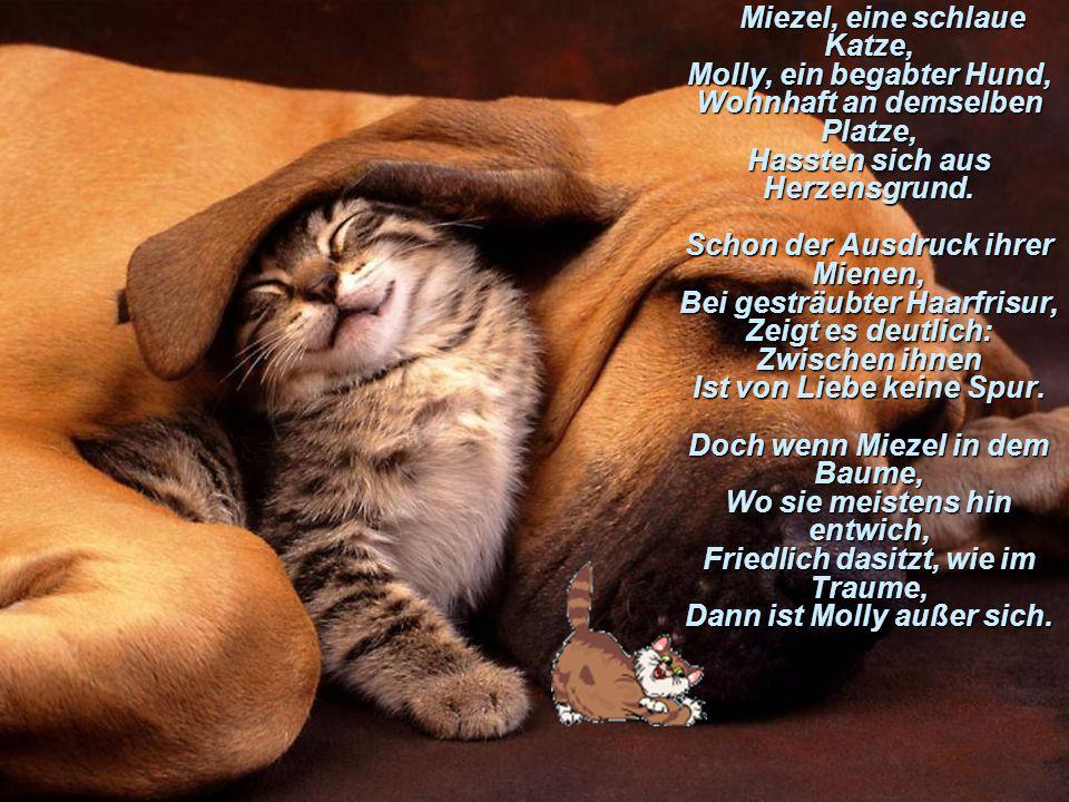 Miezel, eine schlaue Katze, Molly, ein begabter Hund, Wohnhaft an demselben Platze, Hassten sich aus Herzensgrund. Schon der Ausdruck ihrer Mienen, Be
