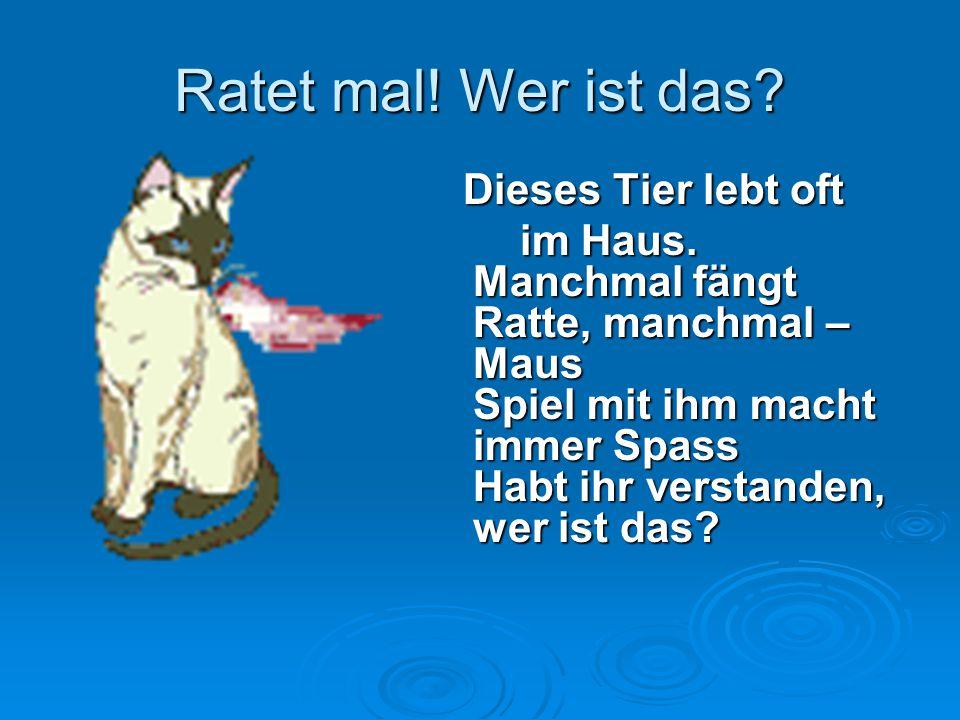 Ratet mal! Wer ist das? Dieses Tier lebt oft Dieses Tier lebt oft im Haus. Manchmal fängt Ratte, manchmal – Maus Spiel mit ihm macht immer Spass Habt