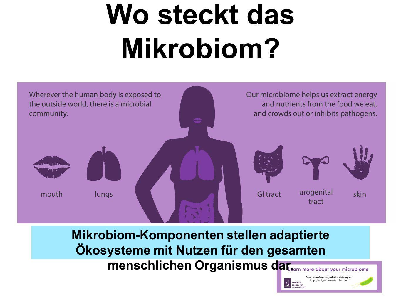 Wo steckt das Mikrobiom? Mikrobiom-Komponenten stellen adaptierte Ökosysteme mit Nutzen für den gesamten menschlichen Organismus dar.