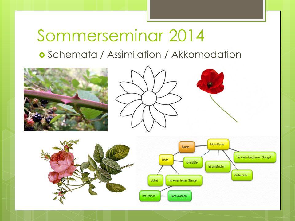 Sommerseminar 2014  Schemata / Assimilation / Akkomodation