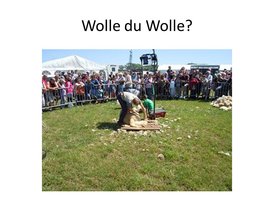Wolle du Wolle