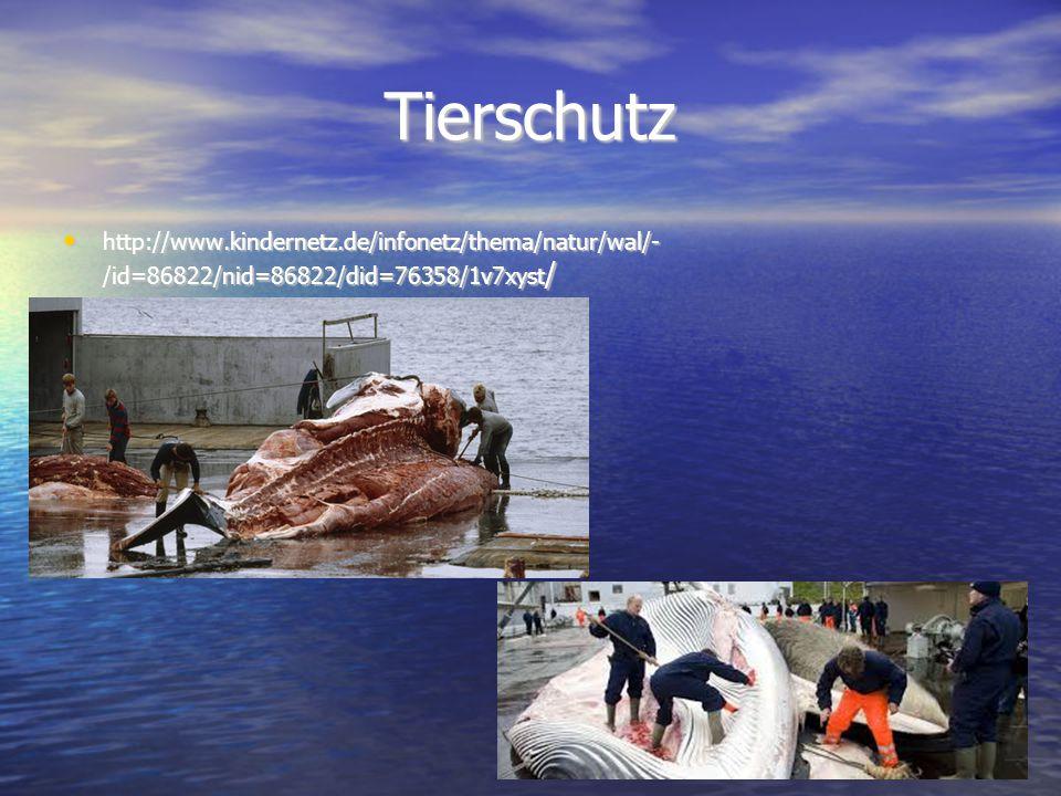 Tierschutz http://www.kindernetz.de/infonetz/thema/natur/wal/- /id=86822/nid=86822/did=76358/1v7xyst / http://www.kindernetz.de/infonetz/thema/natur/w
