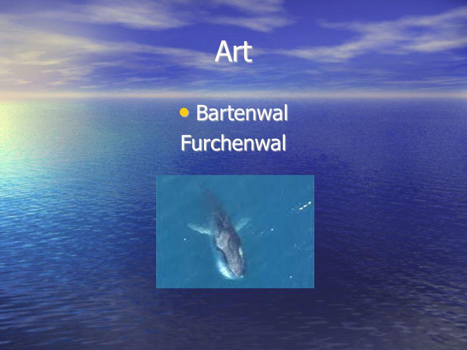 Art Bartenwal BartenwalFurchenwal